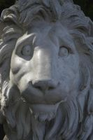 Lion by Clangston