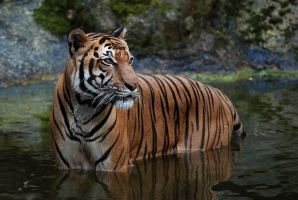 Stripes that Drip by robbobert
