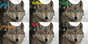 Wolves With Different Eye Colors by Canineart4