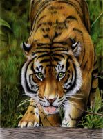 Sumatran Tiger by ManiaAdun