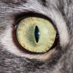 1500 px Cat eye by Hoschie-Stock