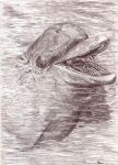 dolphin smile by art4oceans