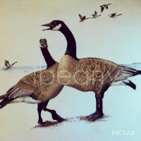 Canadian Geese by ibeany13