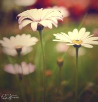 Field of Paper Flowers by MouseMakesMess