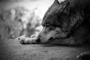 Take me away, by Kayragoesrawr