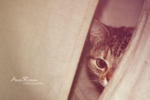 Hidden by AnaRosaPhotography