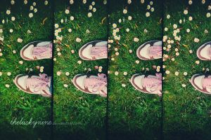 LOMO daisies by theluckynine