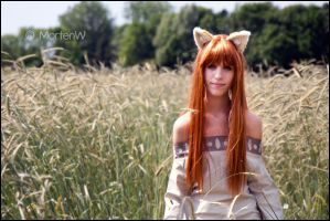 Spice and Wolf: Horo by MortenW