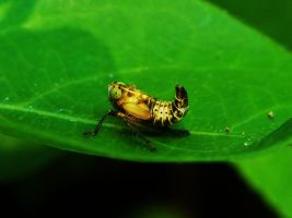 Leafhopper by Stone1980