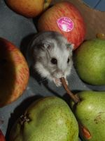 Gerard The Hamster by InLoveAndSqualor