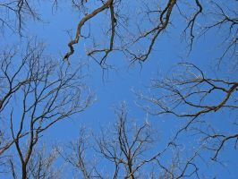 107 - branches by WCat-stock