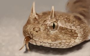 snake study by mahons