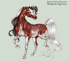 Tigerseye by Carousel-Stables