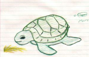 Turtle by fireballflame