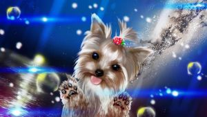 Yorkshire Terrier by Rey13