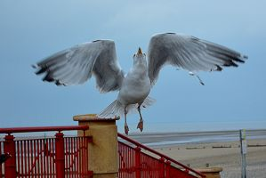 GULL-ible by friartuck40