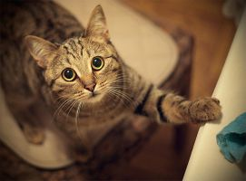 My cat by Vurtov