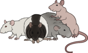 My Rats by nEVEr-mor
