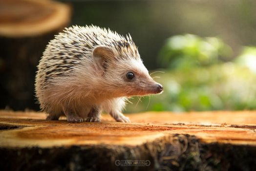 HedgeHog by tuneR97