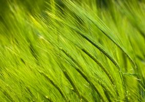 Green grass by Lepricon-1501