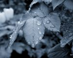 droplets.... by ahmedwkhan