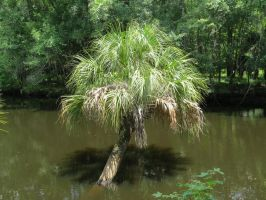Over Watered Palm Tree by Malidicus