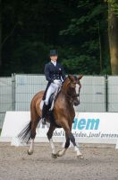 Dressage Stock - XV by Summerly