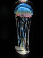 Jellyfish 001 by neverFading-stock