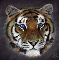 blue eyed tiger by ADRIANSportraits