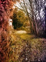 coloured forest path by ftourini-stock