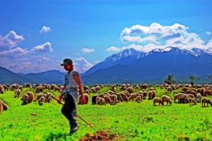 shepherd by WorldInPictures