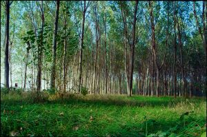 Magic Forest by marius-ilie