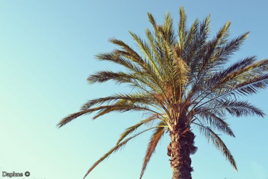 Palm by Daphne-93