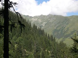 firs and mountains by Sweetlylou