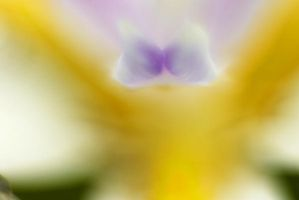 Orchid II by lemures-ex