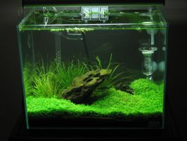 Completed Aquascape 09-06-08 by thegadgetfish