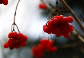 Winter Berries by RollingFishays