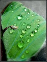 Raindrops by JMcCarty09