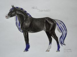NCS Thorhalli by Salvada