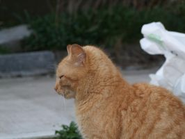 cat in profile by meenags