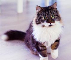 Fixate by MadamMewMew