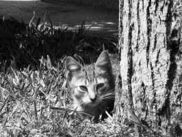 Cat in the cemetery by Darkans