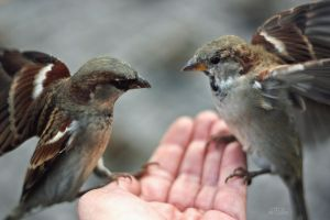 two birds in the hand are worth three in a bush... by teetotally