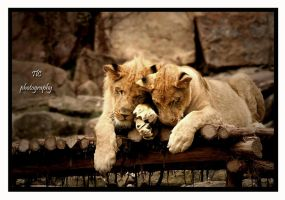 Even the toughest need love by TlCphotography730