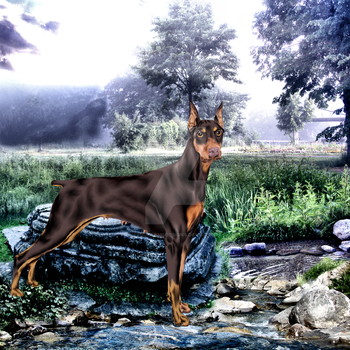 Dobie by painteddreamsdesigns