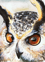 ACEO: Eurasian Eagle Owl by wolfgryph