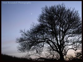 moon and tree by roundy666
