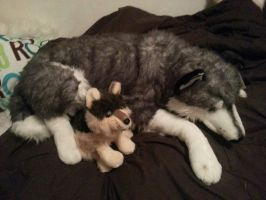 plush huge husky and wolf for sale by xoxoxivoryxoxox