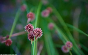 Fireworks Grass by juliekoesmarno