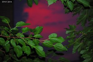 SkyFire with Leaves 0082 8-11-14 by eyepilot13